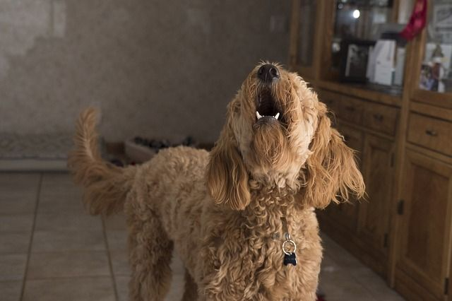 educar a un perro para que no ladre